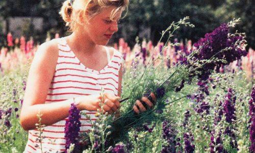 Schneiden von Trockenblumen 1988