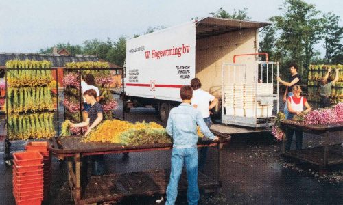 Activité saisonnière Rijnsburg Hollande 1980